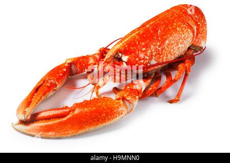 Lobster - John Gollop - Stock Photo