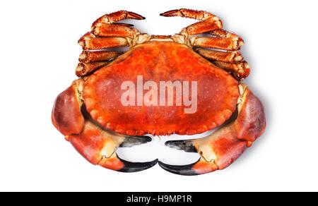 Crab - John Gollop - Stock Photo