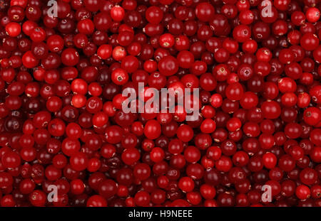 Fresh red ripe cranberries background close up, elevated top view - Stock Photo