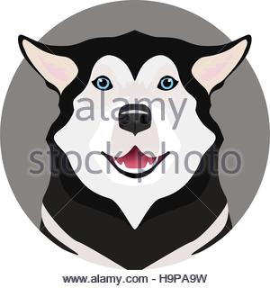 Adorable black and white with blue eyes Husky on circle frame - Stock Photo