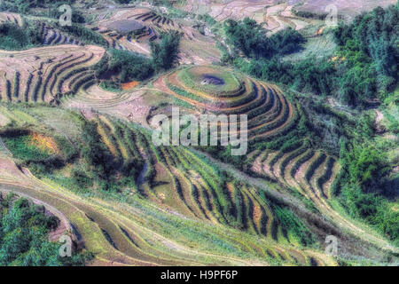 Rice terraces, Lao Cai, Sapa, Vietnam, Asia - Stock Photo