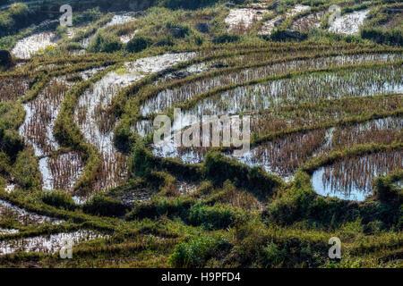 Rice terraces, Lao Chai, Sapa, Vietnam, Asia - Stock Photo