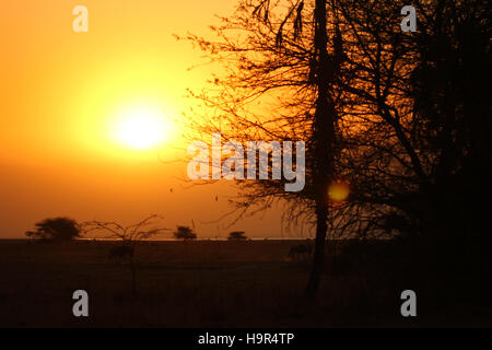 Sunset over the Serengeti plains in Africa. - Stock Photo