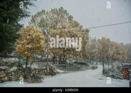Cercedilla, Madrid, Spain. 24th Nov, 2016. Spain Weather; Snow begins to fall in Spain. In the picture is the town - Stock Photo