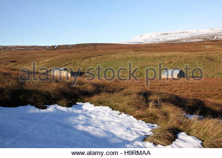 Wemmergill Moor, Lunedale, Co Durham UK 26th November 2016 The morning sun melts the overnight frost after a cold - Stock Photo