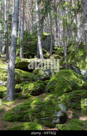 Moss-covered rocks in forest, Sand in Taufers, Taufer Ahrntal, South Tyrol, Italy - Stock Photo