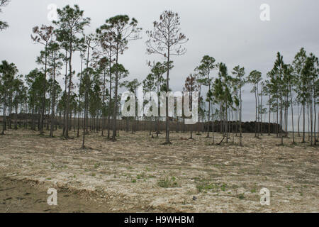 everglades Hole In Donut Restoration Project - Stock Photo