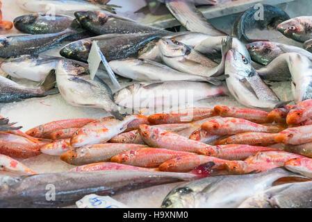 Fresh fish at the Vucciria market in Palermo, Sicily - Stock Photo