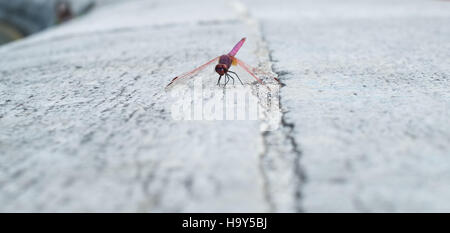 Dragonfly settled on white stone - Stock Photo