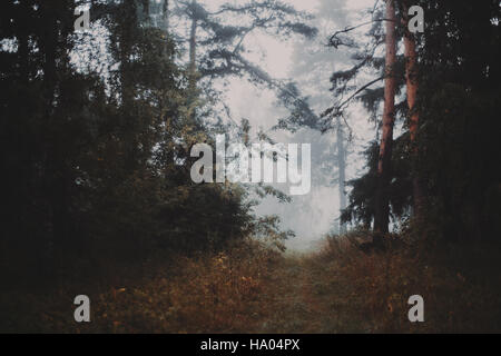 Misty morning in the forest walkway which exits to bright meadow, filled with fog, pines and other trees, grass - Stock Photo