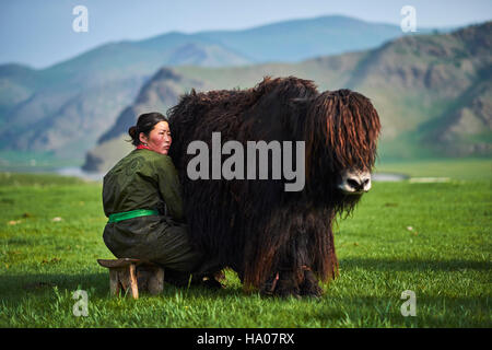Mongolia, Ovorkhangai province, Orkhon valley, Nomad camp, yak milking - Stock Photo