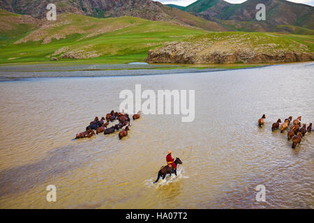 Mongolia, Ovorkhangai province, Orkhon valley, Orkhon river, Nomad camp, Mongolian horserider with their herd of - Stock Photo