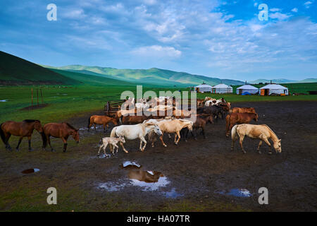 Mongolia, Ovorkhangai province, Orkhon valley, Nomad camp - Stock Photo