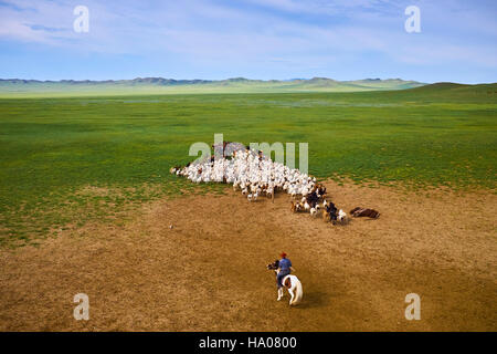 Mongolia, Arkhangai province, nomad camp, sheep herd - Stock Photo