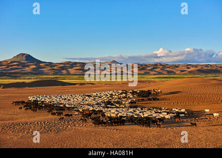 Mongolia, Zavkhan province, sheep herd in the deserted landscape of sand dunes in the steppe - Stock Photo