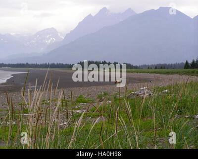 lakeclarknps 25191434831 I Like Long Walks on the Beach - Stock Photo