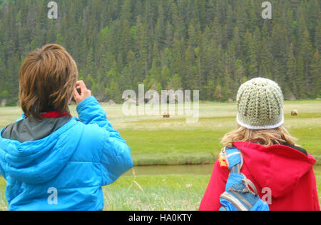 lakeclarknps 25284439205 Sedge Meadow at the Eastern Bear Viewing Area - Stock Photo