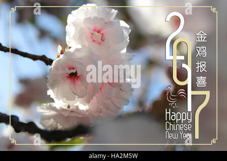 Chinese New Year Greeting Card 2017 with the beautiful Japanese cherry blossom during spring - Stock Photo