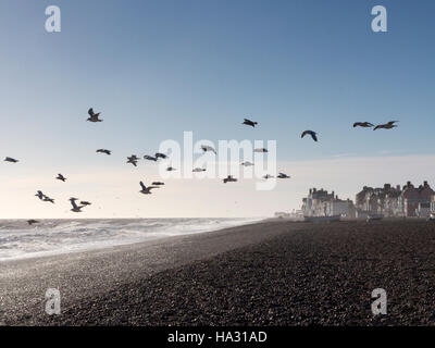 The beach at Aldeburgh Suffolk England in early morning light with seagulls hovering over beach - Stock Photo