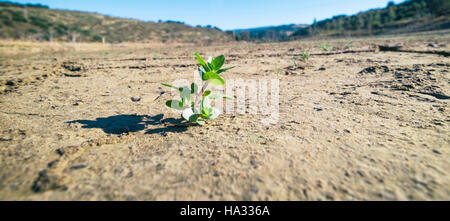 Zahara - el Gastor reservoir, Cadiz Province, Andalusia, southern Spain.  Plants struggling to survive in dried - Stock Photo