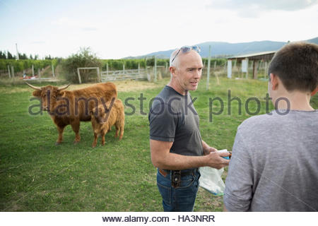 Father and son talking near cows in field on rural farm - Stock Photo