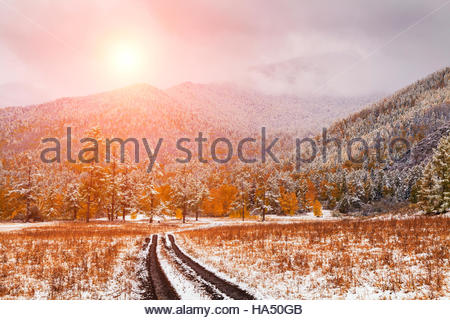 Winter forest in the mountains - Stock Photo