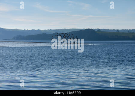 BIrds flying over the Cleddau RIver in Pembrokeshire, The low tide gives the illusion of different levels in the - Stock Photo