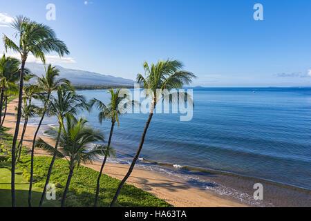 Beach and palms trees in the morning atSugar Beach Kihei Maui Hawaii USA - Stock Photo