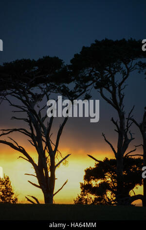 Truly dramatic silhouette of trees against a darkening rain-filled sky lowering over a band of still glowing sunset - Stock Photo