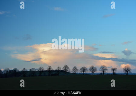 Tranquil Costwold winter line of trees silhouetted against strong blue perfect sky with clouds - Stock Photo