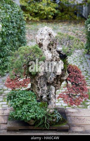 Bonsai tree in the Botanical Gardens, Madrid Spain