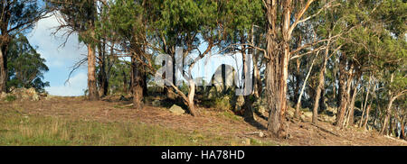 Eucalyptus trees (Ribbon Gums) and granite boulders Tallaganda National Park south of Canberra in New South Wales - Stock Photo