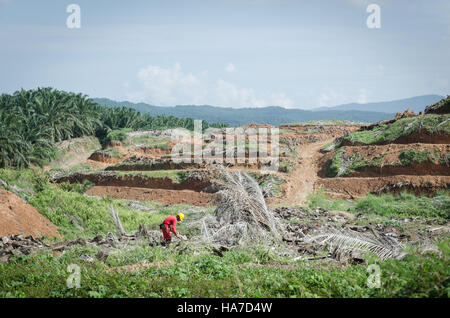 Deforestation for palm oil, working on the palm plantations in Sabah, Malaysian Borneo. - Stock Photo