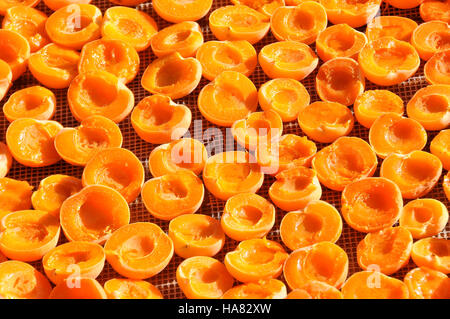 Apricots Drying on Rack - Stock Photo