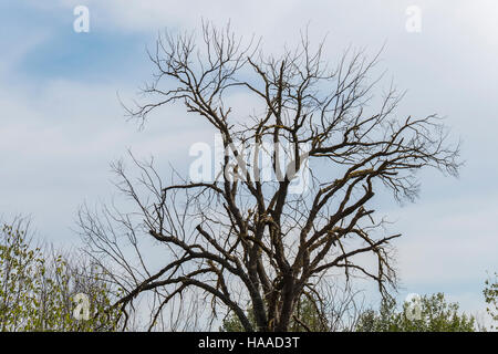 Dry tree in the middle of nature - Stock Photo