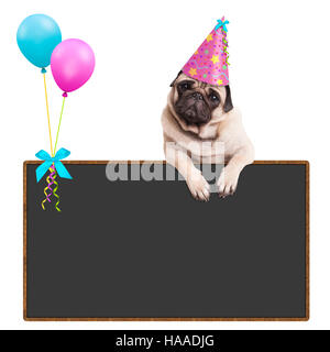 pug puppy dog hanging with paws on blank sign with balloons and wearing pink party hat, on white background - Stock Photo