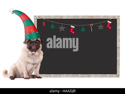 cute pug puppy dog wearing an elf hat, sitting next to blank blackboard sign with christmas decoration, on white - Stock Photo