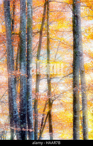 Leaves with autumn colors in forest and double exposure, French alps, Haute Savoie, France. - Stock Photo