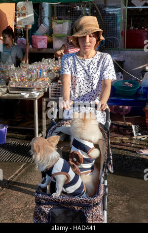 Woman transporting pampered pet dogs in a child pushchair. Thailand S. E. Asia - Stock Photo