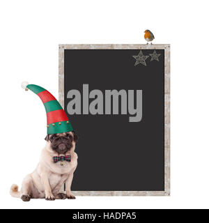 cute pug puppy dog wearing an elf hat for christmas, sitting next to blank blackboard sign with christmas decoration, - Stock Photo