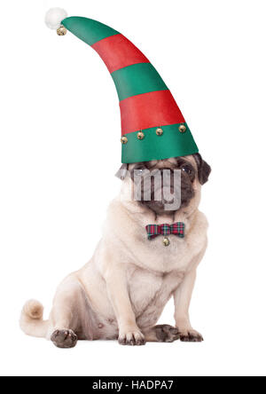 cute pug puppy dog wearing an elf hat for christmas, on white background - Stock Photo
