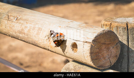 Butterfly posed on a log in the forest close-up - Stock Photo