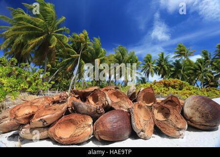 Coconut husk in the palm forest, Christmas (Kiritimati) Island, Kiribati - Stock Photo