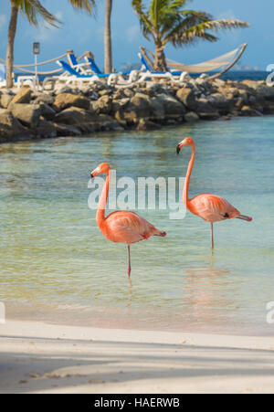 Two flamingos on the beach - Stock Photo