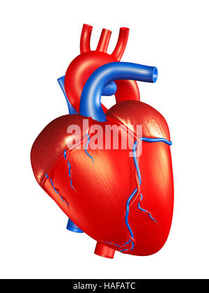 Human heart icon realistic 3d style internal organs symbol stock human heart 3d illustration isolated on white background stock photo ccuart Gallery