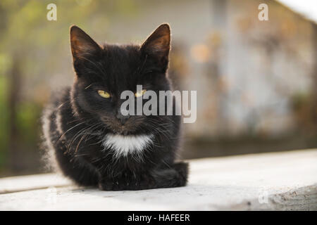 Sad little black cat sits on wood plank in autumn - Stock Photo