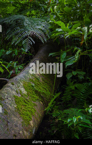Mossy trees and lush leafs in the rainforest, Bali, Indoanesia - Stock Photo