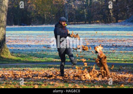 Wandsworth Common, London, UK. 30th November, 2016. Man kicking leaves for his dog to chase. Bright frosty morning - Stock Photo