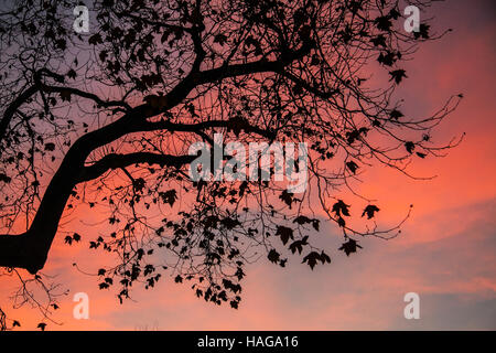 Wimbledon London, UK. 30th Nov, 2016. A colorful sunset on a cold evening in Wimbledon as temperatures drop to freezing - Stock Photo