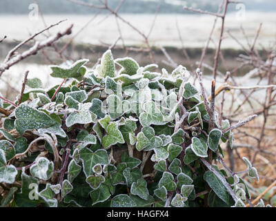 Newquay, Cornwall, UK. 1st Dec, 2016. UK Weather. A frosty morning on the first day of December in Newquay. Frost - Stock Photo